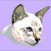 №12 Кошка 17-0936-НКЧ (2010-05) оригинал
