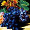 №28 Виноград 36-2666-НВ (2010-09) оригинал