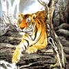 №48 Тигр в горах 32-2627-НТ (2011-02) оригинал