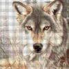 №62 Взгляд волка 32-2708-НВ (2011-05) сетка