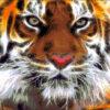 №83 Амурский тигр 33-0910-НА (2011-11) оригинал
