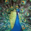 №95 Жар-птица 45-2442-НЖ (2012-02) оригинал