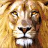 №206 Царь джунглей 36-1334-НЦ (2014-04) оригинал