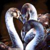 №250 Черные лебеди 43-2116-НЧ (2015-04) без сетки