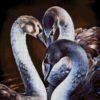 №250 Черные лебеди 43-2116-НЧ (2015-04) сетка