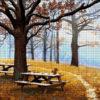 №331 Осенний парк 36-3763-НО (2018-11) сетка