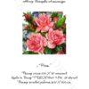 №17 Розы 29-1321-НР (2010-06) титул