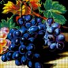 №28 Виноград 36-2666-НВ (2010-09) сетка