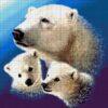 №53 Медведи 29-2116-НМ (2011-03) сетка