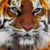 №83 Амурский тигр 33-0910-НА (2011-11) сетка