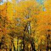 №86 Осень золотая 36-2442-НО (2011-11) сетка