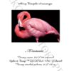 №97 Фламинго 37-2560-НФ (2012-02) титул