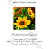 №98 Солнечное настроение 32-1369-НС (2012-02) титул
