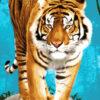 №364 Тигр на прогулке 38-3680-НТ (2019-10) превью