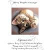 №393 Крошка кот 31-0784-НК (2020-08) титул