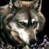 №407 Волк в астрах 37-2668-НВ (2021-01) превью
